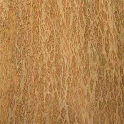 Эвкалипт помеле [Eucalyptus Burl]